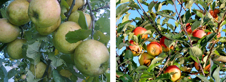 Appels_p01